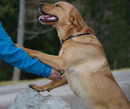 brossage pour chien